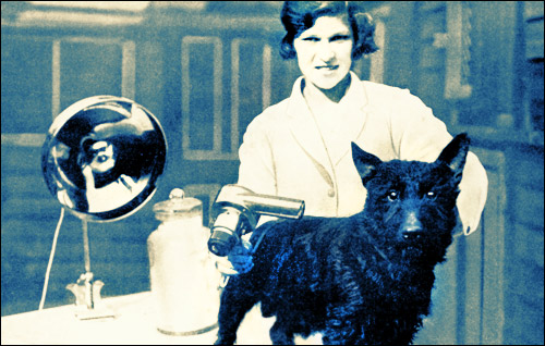 Groomer, grooming a dog. Vintage photo.